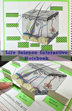 Human Body Part Life Science Interactive Notebook Each chapter in the series will showcase many activities for the students (both middle and high school) to process the information given by teachers. The engaging activities vary to enable all students Science Lesson Plans, Science Curriculum, Science Biology, Science Classroom, Science Fair, Teaching Science, Life Science, Science Notes, Science Ideas