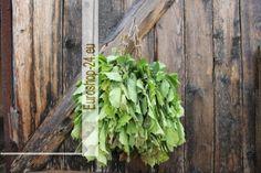 Haselbaum Reisig für Sauna, ca 45 - 50 cm lang