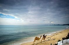 A man and his camels walk along the beach of Hammamet, Tunisia