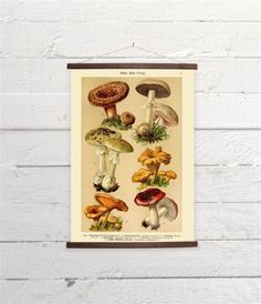 Vintage German Mushrooms Natural History Canvas Poster Print Wooden  Wall Chart Size A3 16x11 by PillowPlanet on Etsy https://www.etsy.com/listing/222454267/vintage-german-mushrooms-natural-history