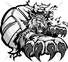 Wildcat Volleyball Cartoon Mascot with Claws tearing out of a Volleyball Ball Vector Illustration