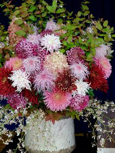 Love all of the various shades of pinks and reds in this pot of Chrysanthemums.