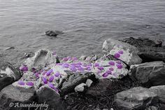 https://www.flickr.com/photos/ainanphtgrphy/shares/514E17   Photos de atilla inan