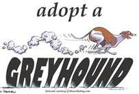 Adopt a Retired Racer