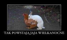 żeby była jasność;))) | 🥇 Potworek.com - dowcipy, kawały, śmieszne filmiki Rabbit, Humor, Memes, Animals, Bunny, Rabbits, Animales, Animaux, Bunnies