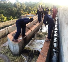The coffee being washed at one of Israel Degefa's washing stations called Mokanissa outside of Kerchanste town.