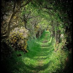 Tree Tunnel - The old road that leads to a ancient stone circle, a beautiful & magical place, Ballynoe, Co.Down, Ireland