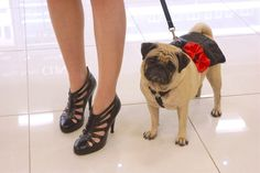 Chloe wore her Leather pug skirt to the grand opening.