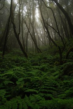 Garajonay National Park, La Gomera, Canary Islands, Spain by Xindaan on Flickr.