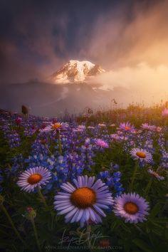 Wildflower meadow on Mazama Ridge, Mt. Rainier NP, Washington, USA.  Revelation by nature and landscape photographer Ryan Dyar on 500px