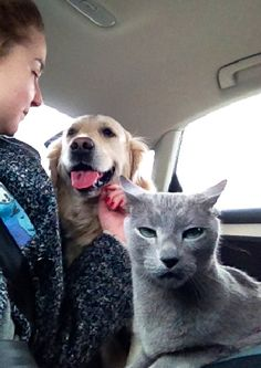 """When your friend is dating someone new and they're in that annoying """"puppy love"""" phase:   31 Cat Reactions For Everyday Situations"""
