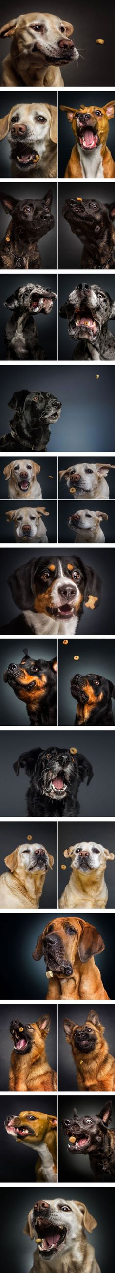 Photographer Captures The Hilarious Expressions of Dogs Catching Treats