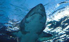 Here's Why Shark Sanctuaries Won't Stop the Cruel Shark Fin Trade