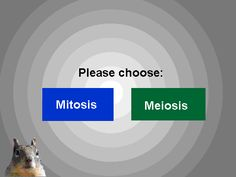 Mitosis and Meiosis on Scratch