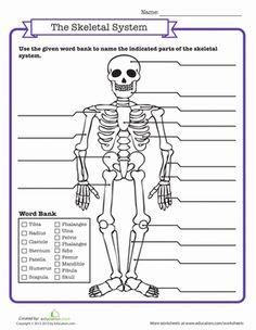 Middle School Life Science Worksheets: Skeletal System Quiz