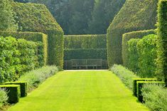 East Ruston Old Vicarage, Norfolk    The Apple Walk -a symphony in green, with espaliered apple trees, nepeta borders and monumental, freshly-crimped beech hedging.