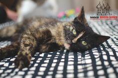 Abi #cute #cutecats #cats #caturday #kot #koty #neko #gato #katz #katzen #kittens #chat