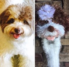 Excited to share this item from my shop: Shih poo golf club cover golf sock Made to Order Golf Club Covers, Golf Head Covers, Golf Socks, Shih Poo, Big Brown, Taylormade, Friends In Love, Golf Clubs