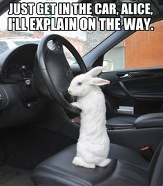 Hop in the car…