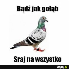 Miej wyjebane, a będzie ci dane Stupid Funny Memes, Wtf Funny, Reaction Pictures, Funny Pictures, Polish Memes, Weekend Humor, Good Humor, Mood Pics, Man Humor