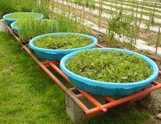 use kiddie pools to plant herbs or produce!