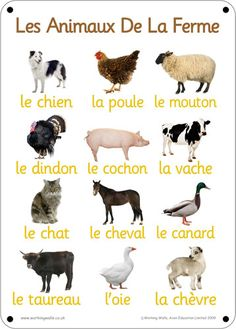 To Learn French Children Learn French Fast, How To Speak French, Animals For Kids, Farm Animals, French For Beginners, Le Zoo, French Colors, French Education, French Expressions