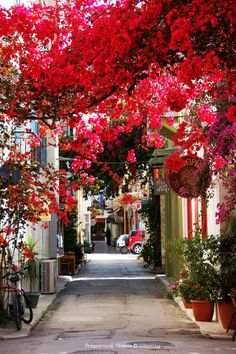 Spring time l Blooming streets in Peloponnese, Greece l Photo Wilson Lu