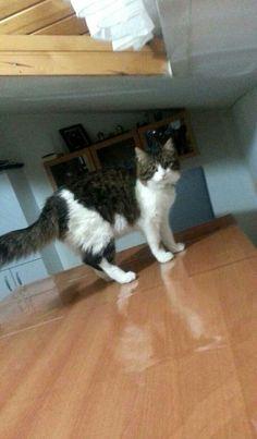 #cat #kedi #katze #şapşik