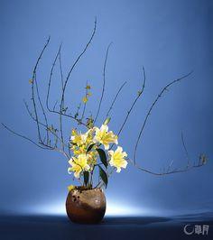 素朴な風合いの器から勢いよく伸びるつるそけいとゆり。口元をすっきりと見せることで、上に伸び上がる植物の生命力を強く感じさせます。花材:つるそけい、ゆり、オンシジウム 花器:陶器花器(加藤清之) Jasmine and lilies vigorously reach up out of the vase of plain texture. Their vitality in rising upward is emphasized by neatening the base. Material:Materials: Jasmine, Lily, Dancinglady orchid Container:Ceramic vase #ikebana #sogetsu