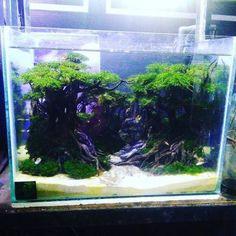 Amazing Aquascape Freshwater Gallery Ideas 28