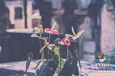 As cores do cemitério?