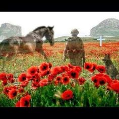 Armistice Day - the eleventh hour of the eleventh day of the eleventh month of Lest we forget. Remembering all the horses and dogs who have given their lives in times of war. Remembrance Day Quotes, Remembrance Day Poppy, Anzac Day Quotes, Remembrance Day Pictures, Armistice Day, Flanders Field, Horses And Dogs, War Horses, Horse Horse
