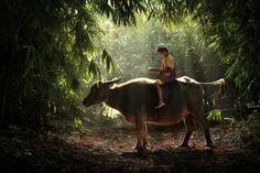 Photos That Will Make You Want To Visit Indonesia