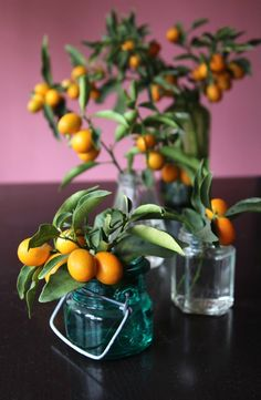 Kumquats in Vintage