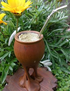 Yerba Mate Gourd - All You Need To Know Before Making a Purchase Love Mate, Te Chai, Yerba Mate Tea, Different Types Of Tea, Chinese Greens, Moscow Mule Mugs, Gourds, Evergreen Shrubs, Planter Pots