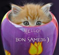 Samedi picture – Hi there! Kittens And Puppies, Baby Kittens, Kittens Cutest, Cats And Kittens, Animals And Pets, Baby Animals, Cute Animals, Bon Samedi Image, Bon Week End Image