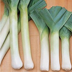 The King Richard Leek is a summer type, non-bulbing leek variety that grows to in length that has green leaves with white inside.