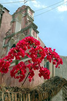 ~ 'Red Against Pink' Corfu, Greece ~