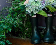Hydrangea hunter boots