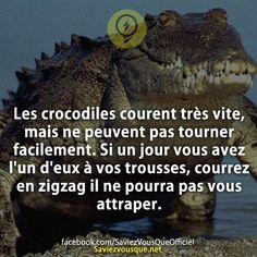 Les crocodiles courent très vite, mais ne peuvent pas tourner facilement. Si un jour vous avez l'un d'eux à vos trousses, courrez en zigzag il ne pourra pas vous attraper. | Saviez Vous Que?
