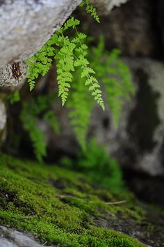 Only spread a fern-frond over a man's head and worldly cares are cast out, and freedom and beauty and peace come in. ~ John Muir