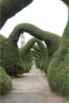 Costa Rica - Zarcero Garden   See More Pictures   #SeeMorePictures