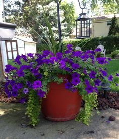 """Very simple. Just follow """"thriller, filler, spiller"""" I use a Spike for the """"thriller."""" New Wave Petunias for the """"filler"""" and Creeping Jenny for the """"spiller."""""""