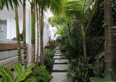 If you were looking for (tropical gardens), take a look below Palm Trees Landscaping, Large Backyard Landscaping, Tropical Landscaping, Small Tropical Gardens, Tropical Garden Design, Garden Yard Ideas, Side Garden, Garden Layouts, Landscape Architecture Design