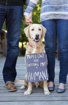 If I was allowed to get a dog... I could do this. I want a dog dammit.