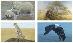 Buy original oil paintings by Jonathan Truss and David Shepherd - two of the most renowned wildlife artists the world has ever known. Art Paintings For Sale, Oil Paintings, Wildlife Art, Environment, Elephant, Earth, Fine Art, World, Artist