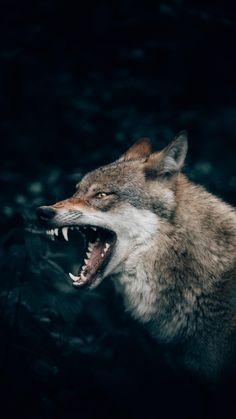 Wild animals , dangerous view