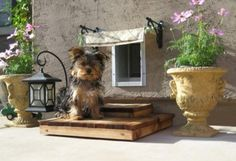 From pint-sized armoires to cozy handmade dog beds, you and your furry friend will love these doggie decor projects straight from HGTV viewers. Pet Door, Doggy Doors, Dog Yard, Porch Steps, Niches, Dog Rooms, Animal Decor, Dog Houses, Dog Life