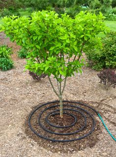 The Top 3 Rules for Tree Care (from the bloggers at Gardener's Supply)