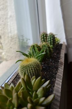 I'm loving the newest addition to our indoor gardens: windowsill succulents. On an innocent trip to Lowe's to look at self-watering pots, we were distracted by a cute little potted arr…